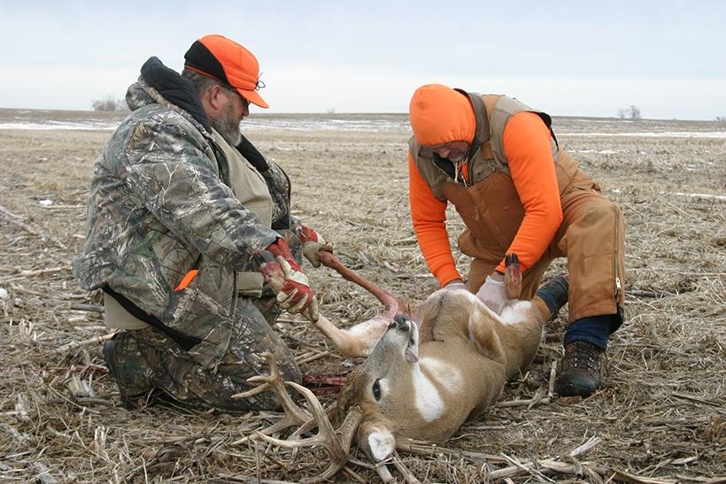 deer skinning knife
