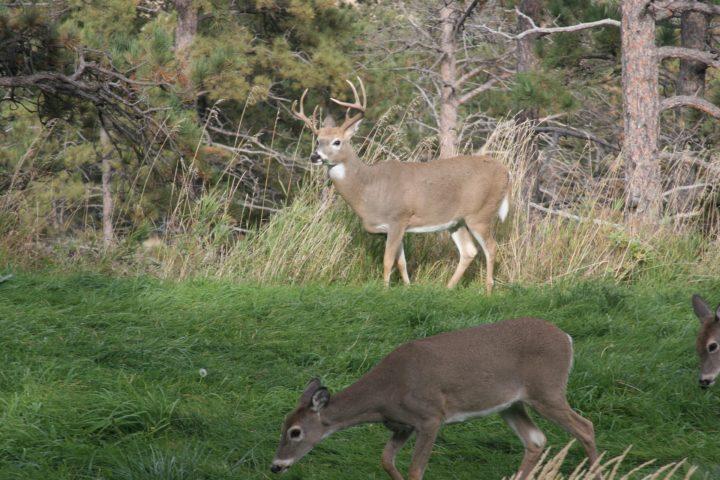 best hunting spotting scopes