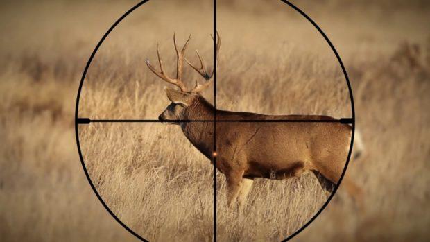 shotgun with scope