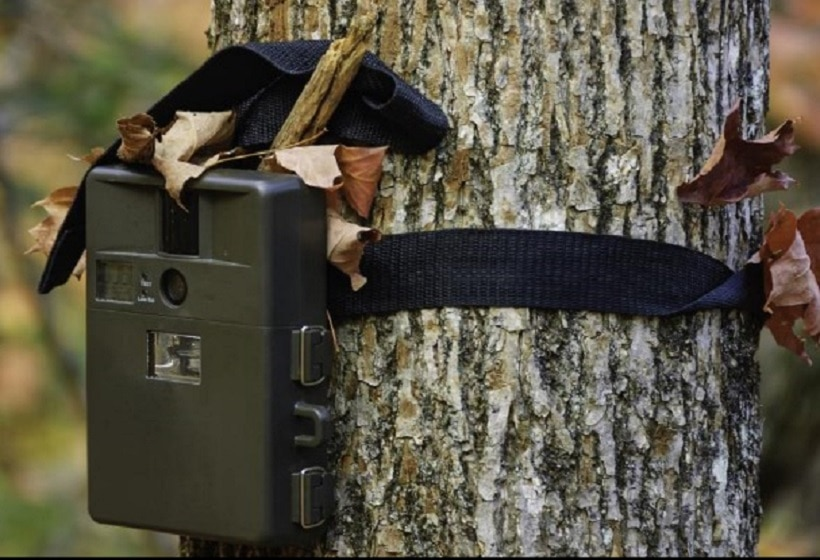 best-wildlife-camera